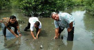 PLN dan Rumah Zakat Sosialisasikan Pengelolaan Hutan Mangrove